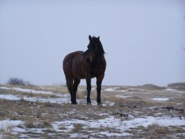 horse snow stock 3 by Aphoticbeauty