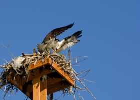 Bolting from the nest by Circusdog