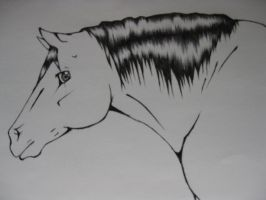 horse drawing by TheNewCoyote