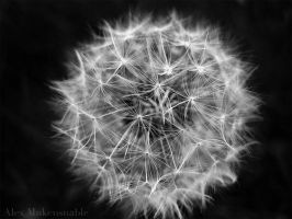 Sailing Seeds by Alexbalix
