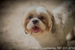 DOG by Caramanos2000