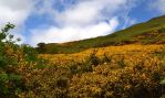 Gorse Weed on the Hills by F16CrewChief