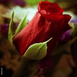 D'un rouge Amour by Rayon2lune