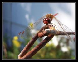 Dragonfly by 3ndless3cho