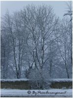 Winter 2009 by ByPriorArrangement