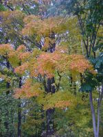 Canadian Fall Colours 44 by Aswang301
