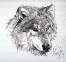 50-Minute Wolf Charcoal Sketch by Skimbleshanks2