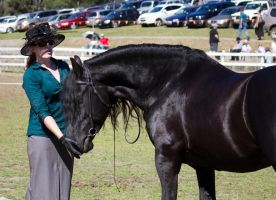 STOCK - Canungra Show 2012 184 by fillyrox