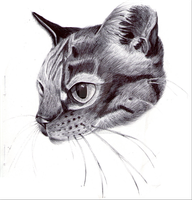 Biro Cat by Sonicgirl582