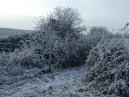Severe Frost. by Mozisart