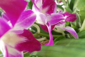 Stock 381 - Orchid by pink-stock