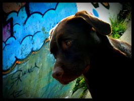 Gangster Dog by simoner
