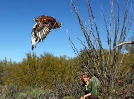 Hawk and Trainer 1518 by mammothhunter