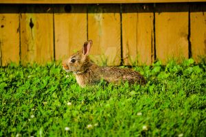 Project 365 - 168 - Sunny Bunny by jguy1964