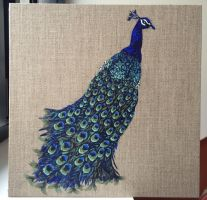 Peacock by illustratrice-lalex