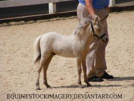 Miniature Horse foal 2 by EquineStockImagery