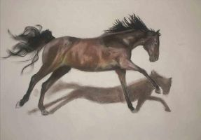 Horse-running-studie by menouthis