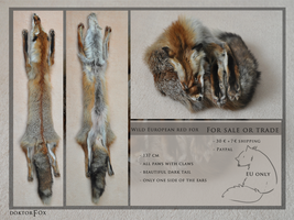 Sold, european red fox by DoktorFox