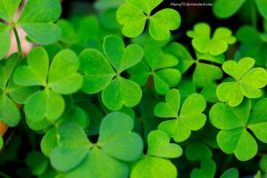 To Be In Clover by Aheng711