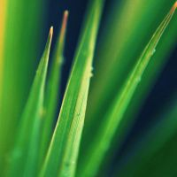 greener by Laura1995