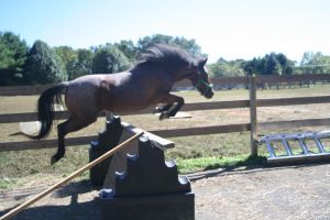 Pony Free Jump by BellaNotte-Stock