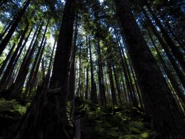 Tongass Forest by Glacierman54