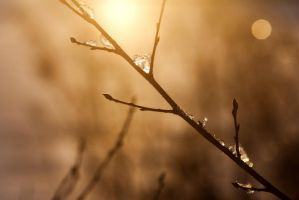 Wind Chill 100 by leays