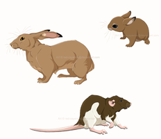 Rodents by Red-Cayenne