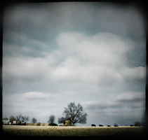 New Pastoral by intao