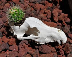HandMade Flower Pot Wolf Skull Replica by MorRokko