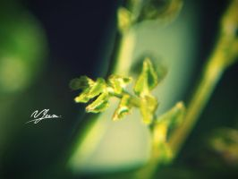 Green Bokeh by vjun