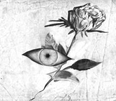 the rose of sight by dieistoday