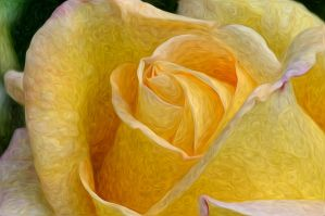 Yellow rose in Pixel Bender by PaulWeber