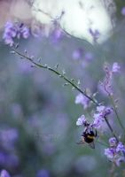 Evening Bee by FreyaPhotos