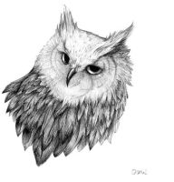 owl by Enife