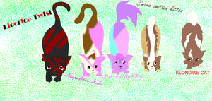 Candy kitten adopts (open) REDUCED PRICE by vulpix15