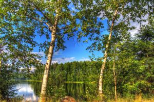 HDR trees by lindsays-photos