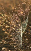 Web of Many Colors by GRM327