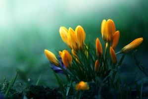 sounds of spring by Enkidulan