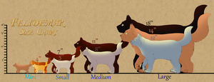 Felidemar Cat Size Chart by lilwyverngirl