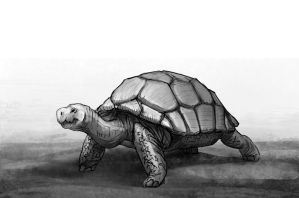 Tortoise study - edited by Karollos