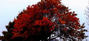 autumn painted the leaves red by IamNasher