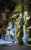 Ice and Moss by TheUniphotoghrpher