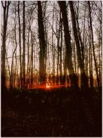Forest sun by NC-sl