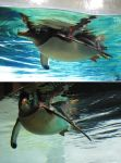 Zoo 14 Penguin by PirateLotus-Stock
