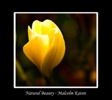 Natural Beauty 2 by FireflyPhotosAust