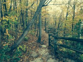 Fall Path by cowlicks6546