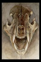 Roar -Bear Skull Frontal by Fruba
