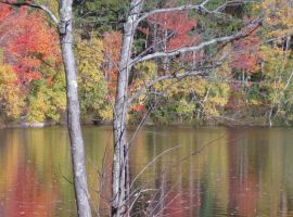 fall reflections 2 by crazygardener