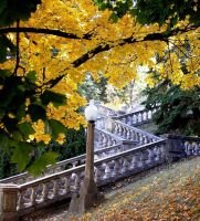 Fall tree and stairs by bwall49